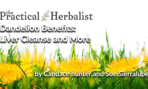 Dandelion Benefits: Liver Cleanse and Detox is Just the Beginning