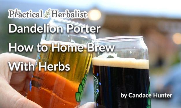 How to Home Brew: Easy Dandelion Porter, Malt Extract Herbal Beer