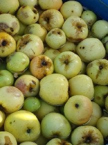 Simple Hard Apple Cider Recipe