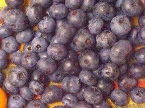 Bilberry: A True Blue Friend