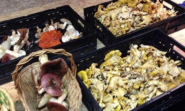 Practical Herbalist Mushroom Trip (Beginner Tips Included)