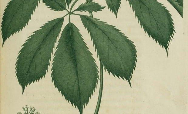 Herbal Aphrodisiacs, Seriously?