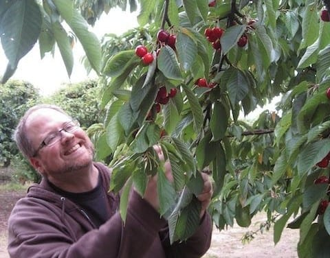 Cherries with a Side Order of St. John's Wort