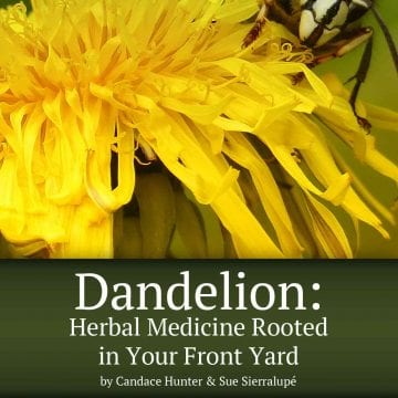 dandelion book cover
