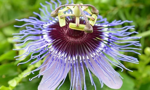 9.Herbalism is the Medicine of the People