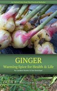 Ginger: Warming Spice for Health and Life