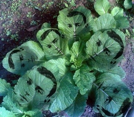 Herbal Celebrities