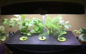Overcome low light conditions with hydroponics