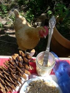 chicken and bird feeder