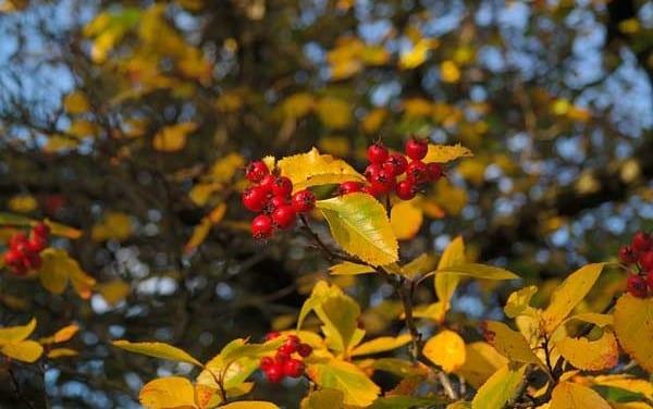 31.Herbal Tree Medicines