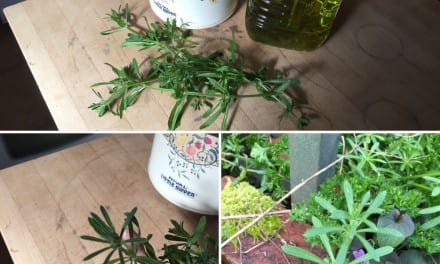 Cleavers + Grape Seed Oil = Goodness from the Garden