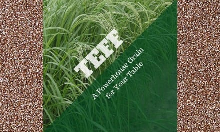 Teff: Gluten-free Powerhouse Grain for Your Table