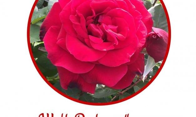 Roses: Symbolism and Flower Essence