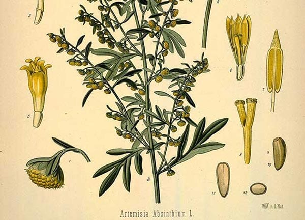 54.How to Choose an Herbal Study Course