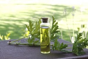 rose-geranium-herbal-oil