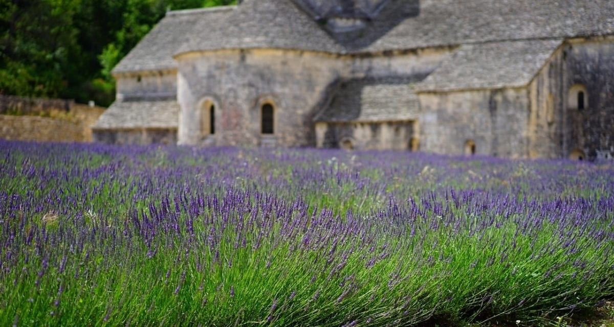 Lavender: The Best Gift for a New Home
