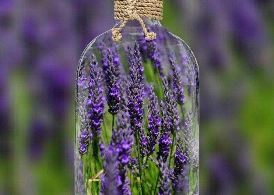 Lavender Essential Oil Properties and Uses