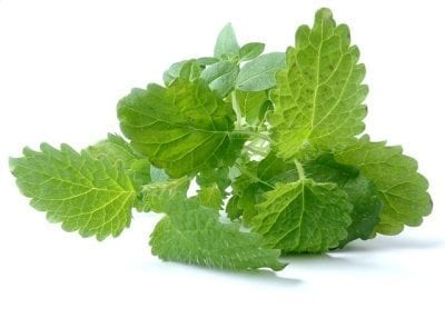 Lemon Balm – Defense Against Herpes