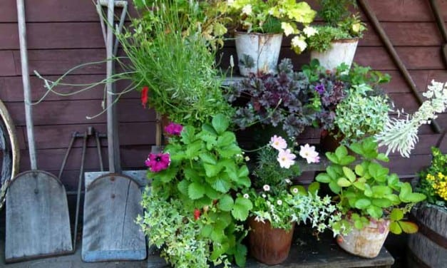 90.Growing Herbs in Small Spaces with Bonnie Rose Weaver and Mari Amend