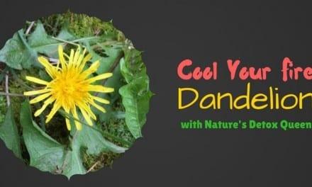 Dandelion Energetics: Cool and Dry Detox Queen