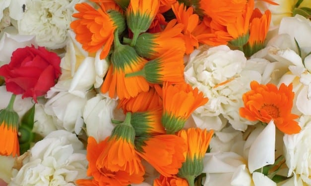 Sunny First Herbal Medicine: Calendula Remedies by and for Kids