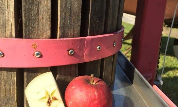 Apple Pressing as a Home Herbalist