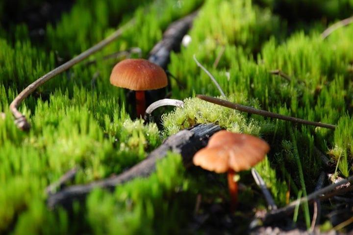 126.Jason Scott – Mushrooms, Medicine, and Alchemy