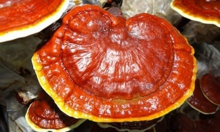 Reishi Energetics: TCM, Ayurveda, Traditional Western Herbalism and Formulation