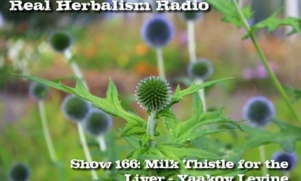 166.Milk Thistle for the Liver – Yaakov Levine