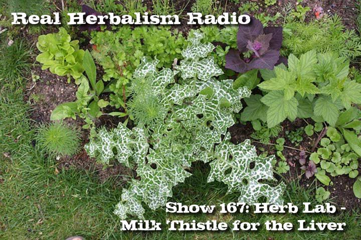 167.Herb Lab – Milk Thistle for Liver Health