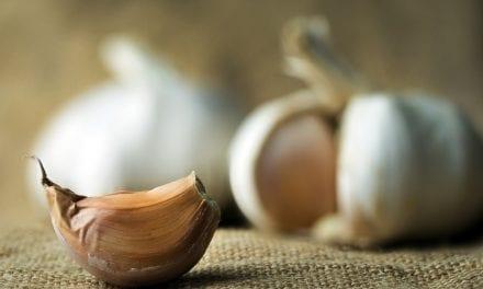 Medicinal Uses of Garlic and Growing Garlic