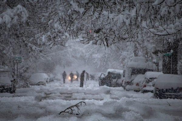 Wildcrafting in Winter – The Shoestring Herbalist