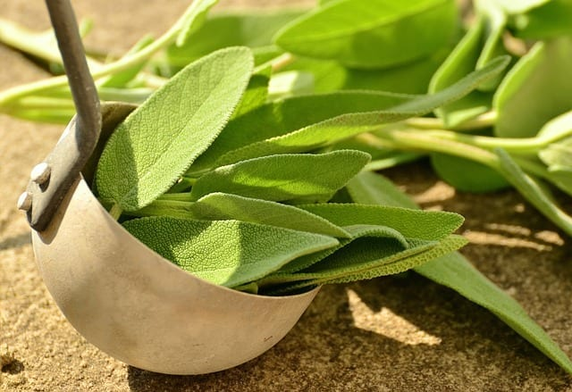 Sage Herbal Medicine, Energetics for Common and Red Sage