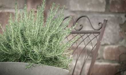 Rosemary Energetics: Digestive, Anxiety, Cleansing Herbal Remedy