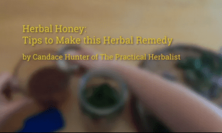 Herbal Honey: How to Make & Master this Herbal Medicine