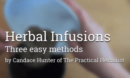 Herbal Infusions: How to Make & Master this Herbal Medicine