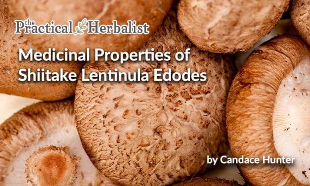 Medicinal properties of Shiitake, Lentinula Edodes Health Benefits
