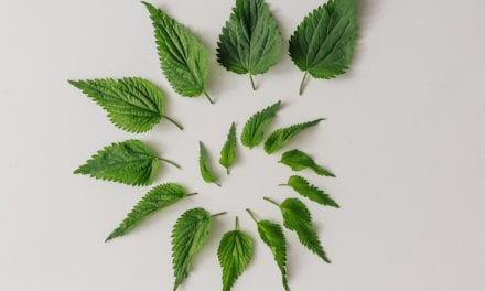 Nettle Magic for Selfcare and Nurturing the Body