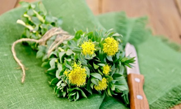 Rhodiola rosea Herbal Home Remedy for Stress Relief