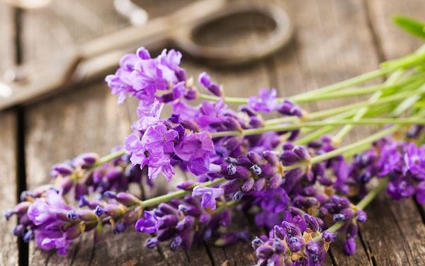 Ease Stress Magically with Lavender
