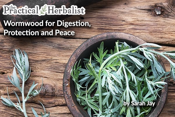 Wormwood Artemisia spp for Digestion, Protection, and Peace