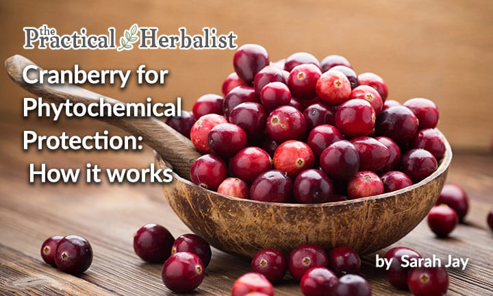 Cranberry for Phytochemical Protection: How it works