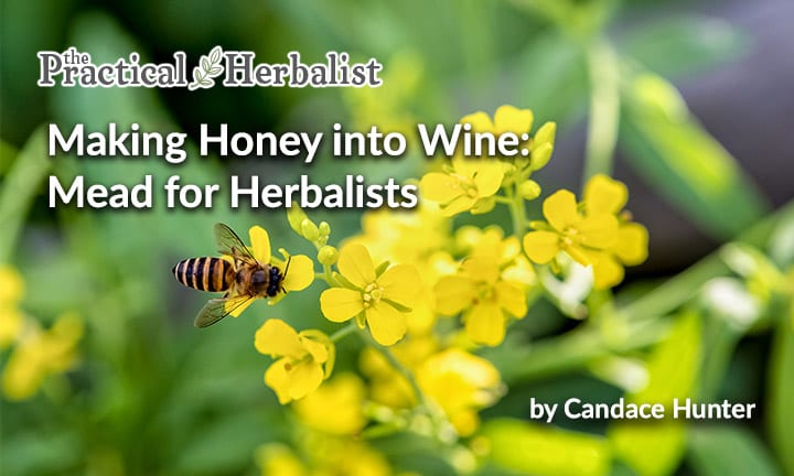 Making Honey into Wine: Mead for Herbalists
