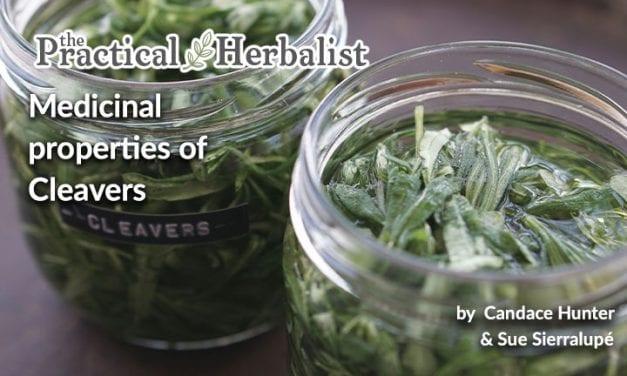 Medicinal Properties of Cleavers