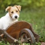 Gardening with Dog: Tips for Creating a Dog-Proof Garden
