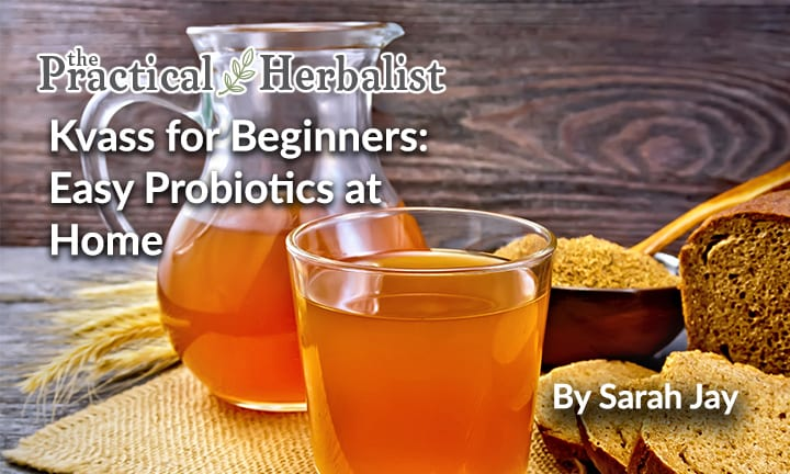 Kvass for Beginners: Easy Probiotics for Digestion and Immunity