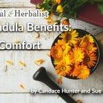 Calendula Benefits: Sunny Herbal Remedy Tea for Skin Comfort
