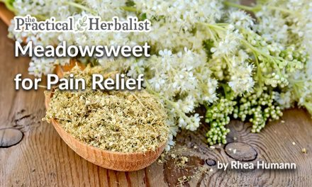 Meadowsweet for Pain Relief: Historic Herbal Remedy that Still Works